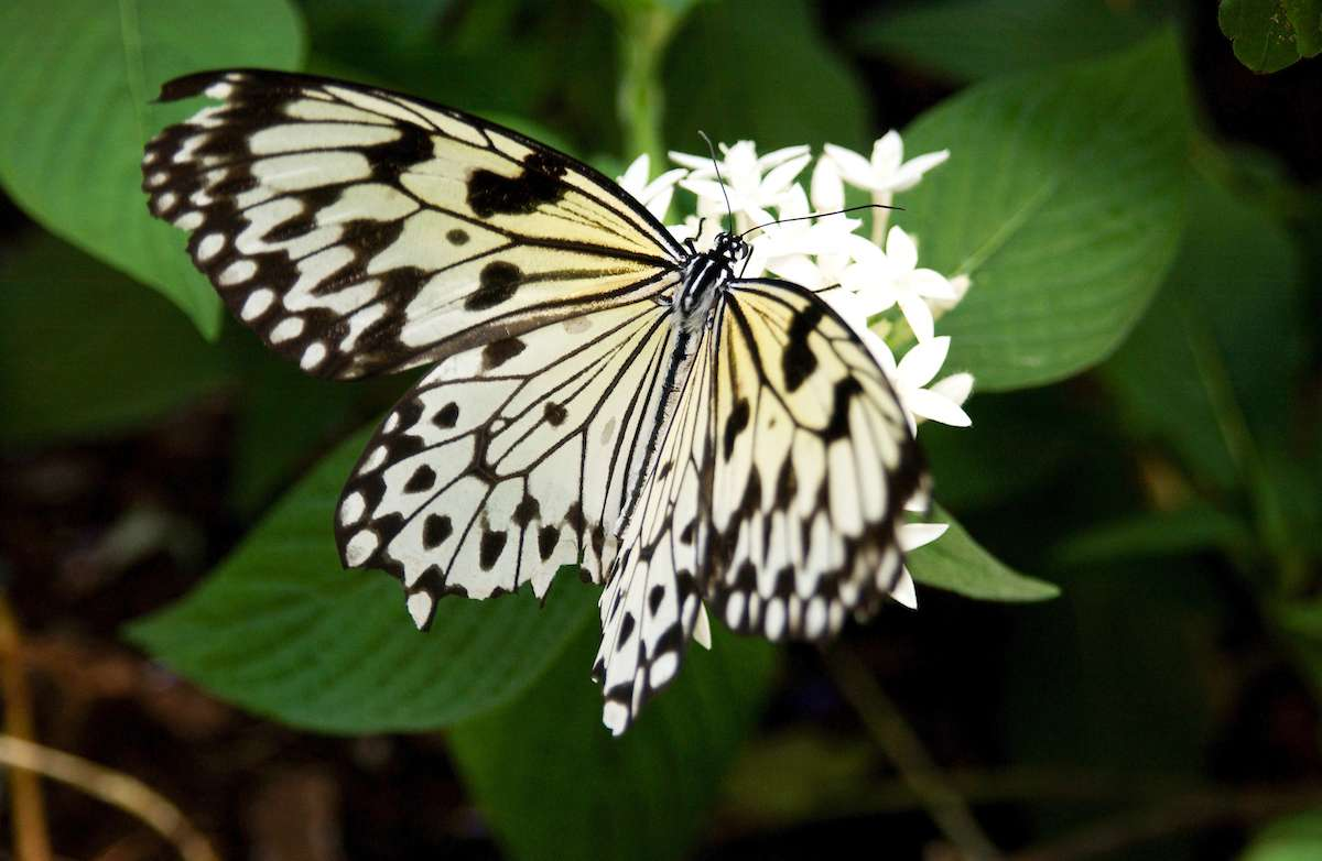 Butterfly Rainforest, Florida Museum of Natural History